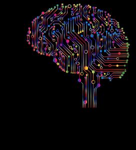 Verdrahtungen Schaltungen im Hirn